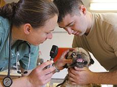 Curso Online Primeiros Socorros para Cães e Gatos - Principais Acidentes