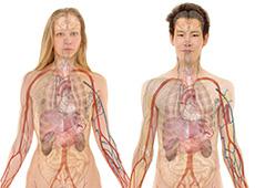 Curso Online Capacitação de Atendente de Farmácia e Drogaria - Anatomia Humana e Farmacologia