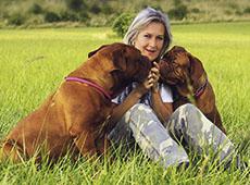 Curso Online Como Cuidar e Educar o seu Cão
