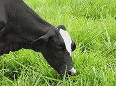 Curso Online Planejamento Alimentar em Sistema de Pastejo - Para Gado de Leite e Corte