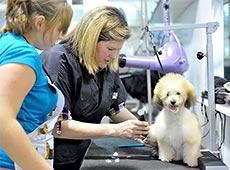 Curso Online Capacitação de Auxiliar Veterinário - Cães e Gatos