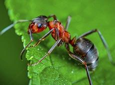 Curso Online Controle de Formigas Cortadeiras
