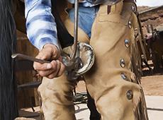Curso Online Casqueamento e Ferrageamento de Equinos