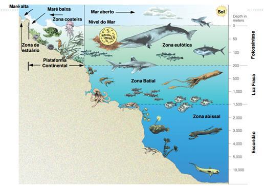 Subdivisão do mar de acordo com sua profundidade