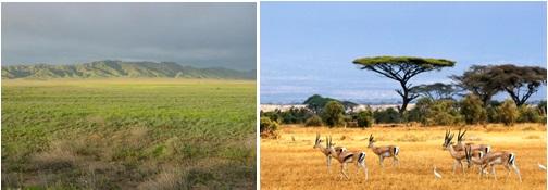 Exemplos de animais e plantas dos campos (estepe à esquerda e savana à direita).