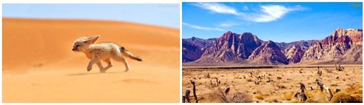 Exemplos de animal e plantas do deserto (raposa-do-deserto à esquerda).