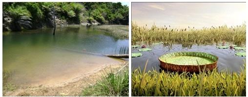 Exemplos de províncias lênticas (brejos, lagoas, pântanos).