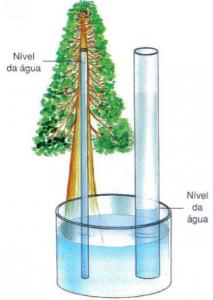 A elevação da água em tubos capilares é inversamente proporcional ao diâmetro do tubo ( quanto mais fino, mais a água sobe no capilar). A capilaridade contribui para o deslocamento de seiva bruta pelos microscópicos vasos lenhosos das plantas (das raízes as folhas).