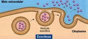Exocitose. Obs: é pela exocitose que as células do pâncreas e de outras glândulas eliminam seus produtos
