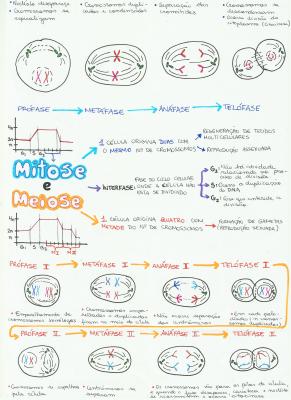 mapa-biologia-mitose-meiose