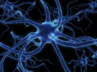 Como funciona o sistema nervoso?