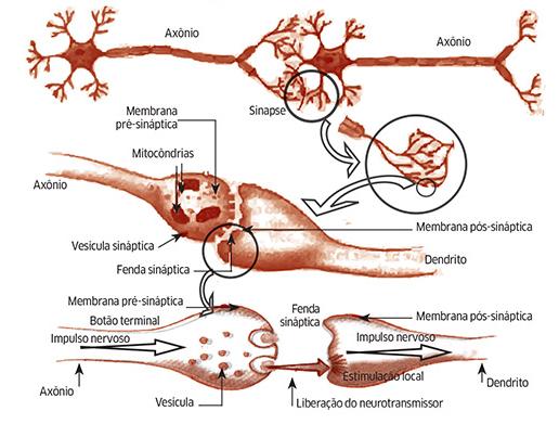 Detalhes da sinapse