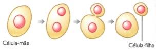 Exemplo de reprodução assexuada em um organismo unicelular