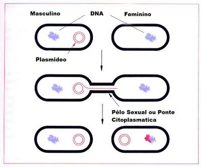 Esquema de conjugação bacteriana