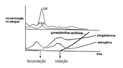 Concentração dos hormônios quando há gravidez