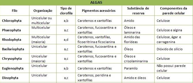 Principais grupos de algas uni e pluricelulares pertencentes ao reino Protoctista. Obs: Chlorophyta (algas verdes), Phaeophyta (algas pardas) e Rhodophyta (algas vermelhas)