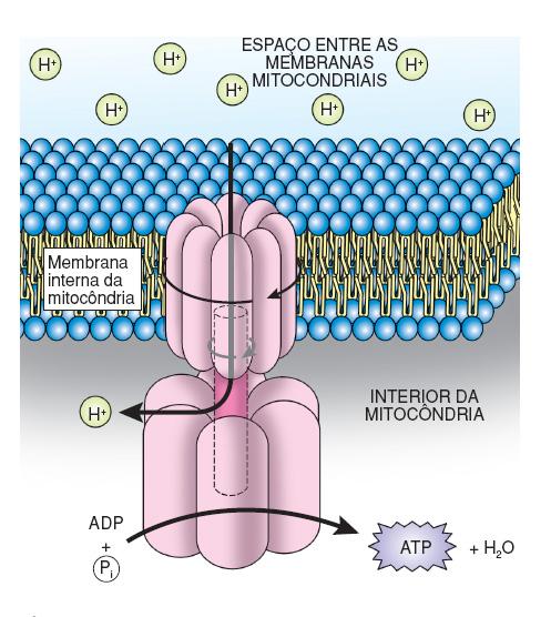 resumo-de-respiracao-celular7