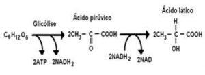 resumo-de-respiracao-celular10