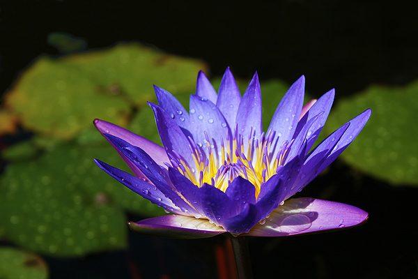 Flor de uma angiosperma