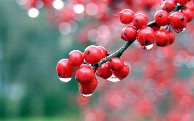 O fruto protege e auxilia na dispersão das sementes, quando ingerido por algum animal