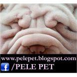 Dermatologia de cães e gatos