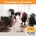 Hotel para cães - Minnipets