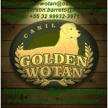 Golden Wotan Kennel Juiz de Fora