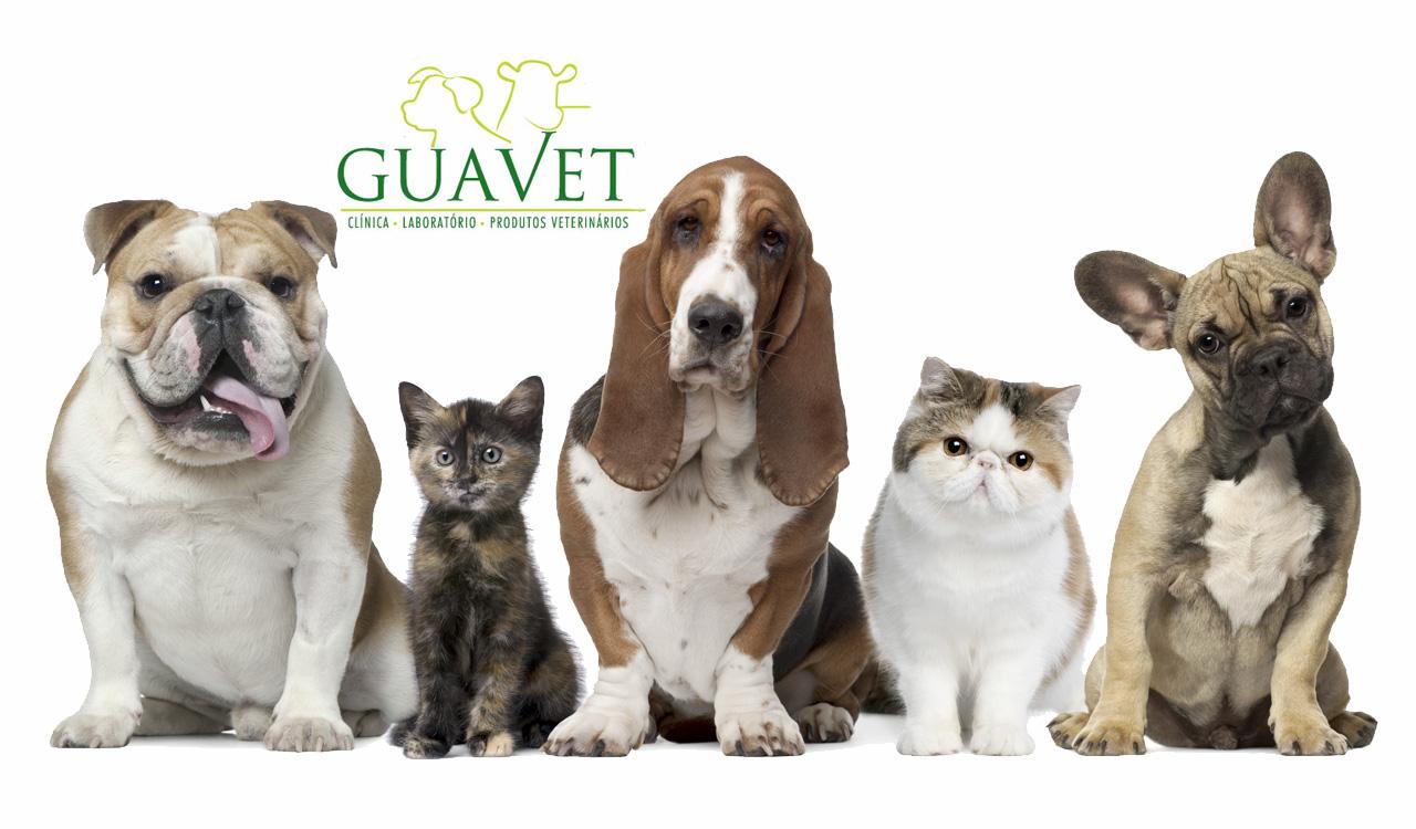 Guavet Pet