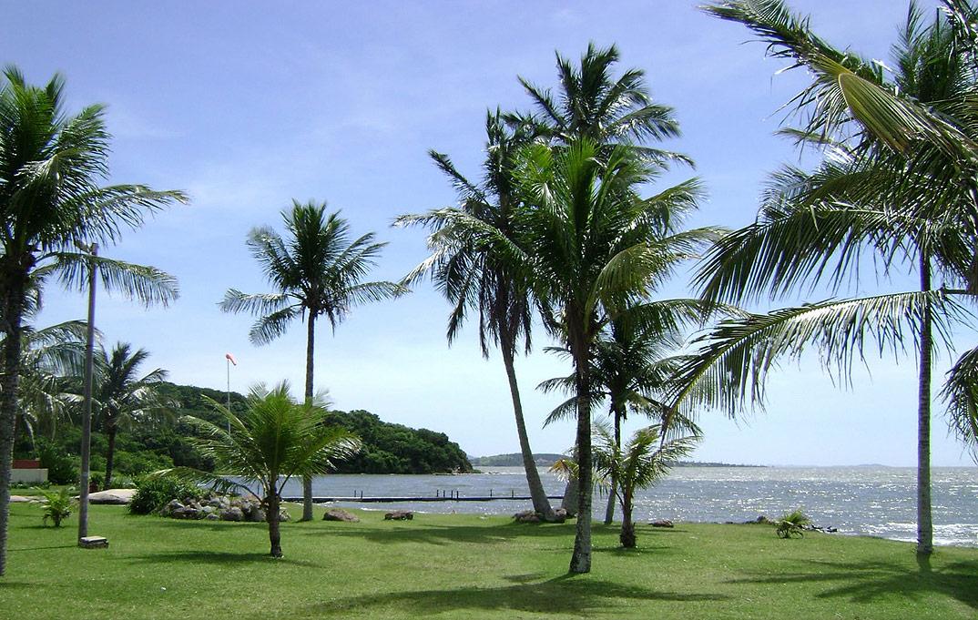 Floricultura Araruama - Imagem 4