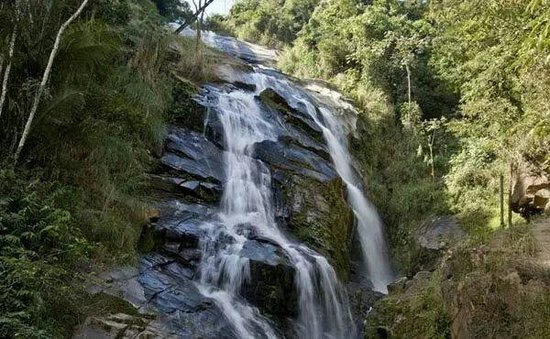 Floricultura Ipatinga - Imagem 4