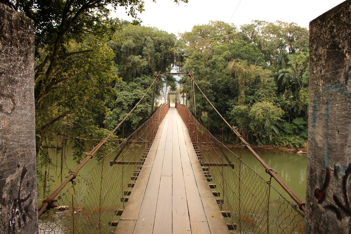 Floricultura Jaraguá do Sul - Imagem 3