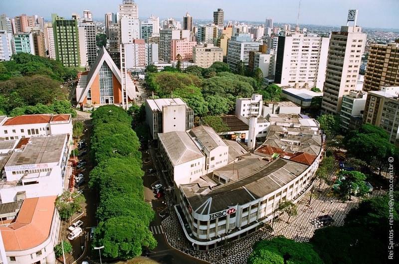 Floricultura Londrina - Imagem 4
