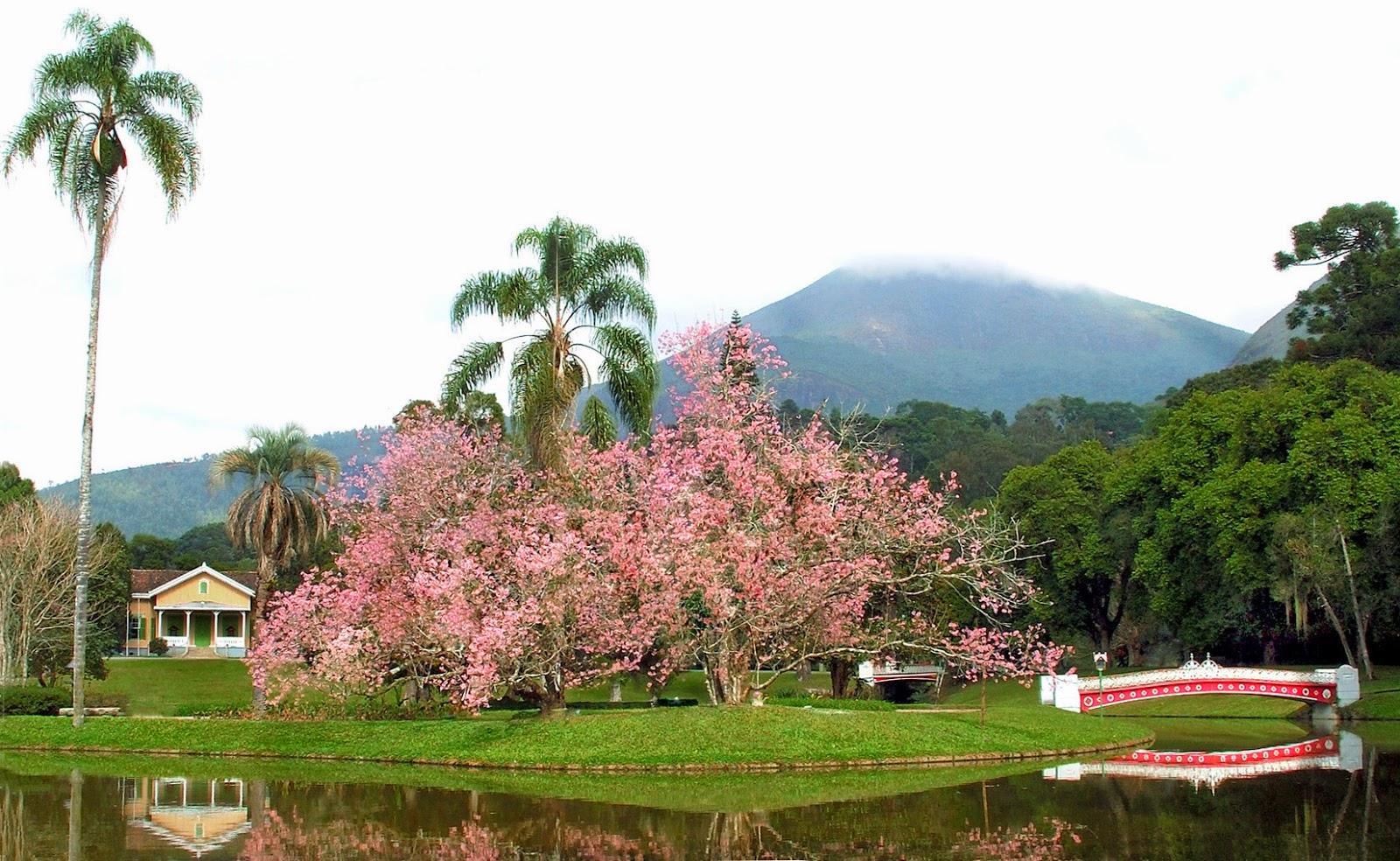 Floricultura Nova Friburgo - Imagem 1