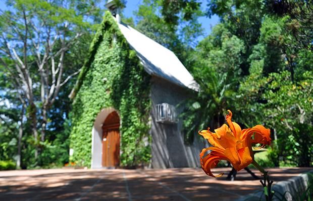 Floricultura Santa Cruz do Sul - Imagem 1
