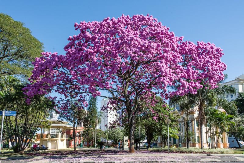 Floricultura em Uberlândia  - Foto 1