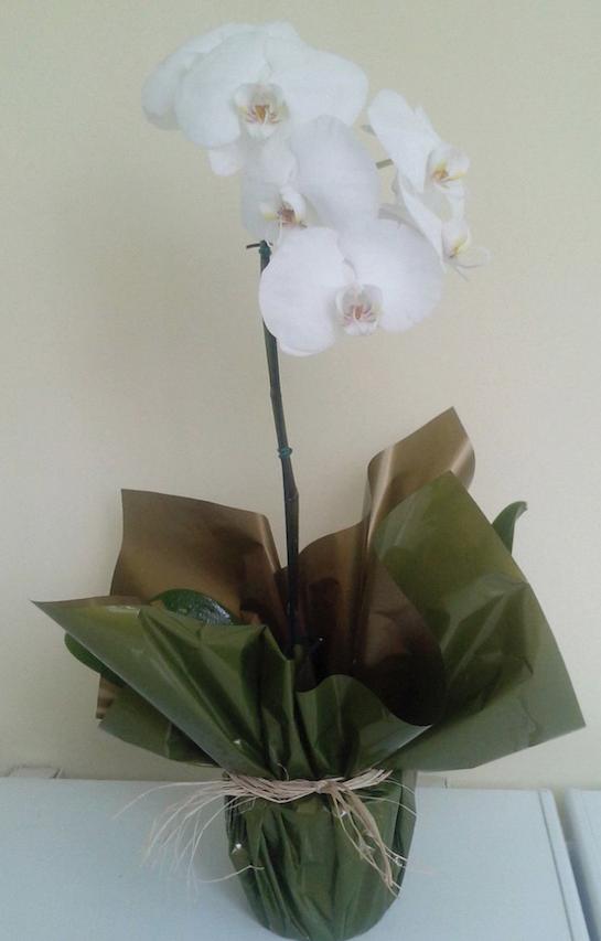 Flores Barra Mansa - Floricultura Barra Mansa - Produto 1