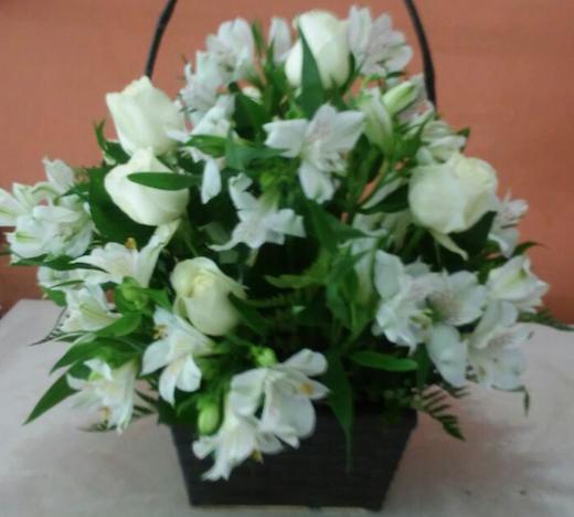 Flores Cambé - Floricultura Cambé - Produto 1