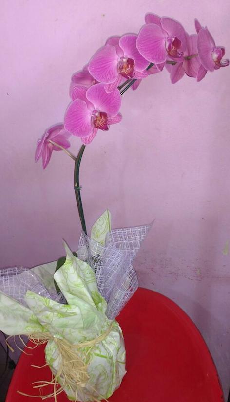 Flores Crato - Floricultura Crato - Produto 1