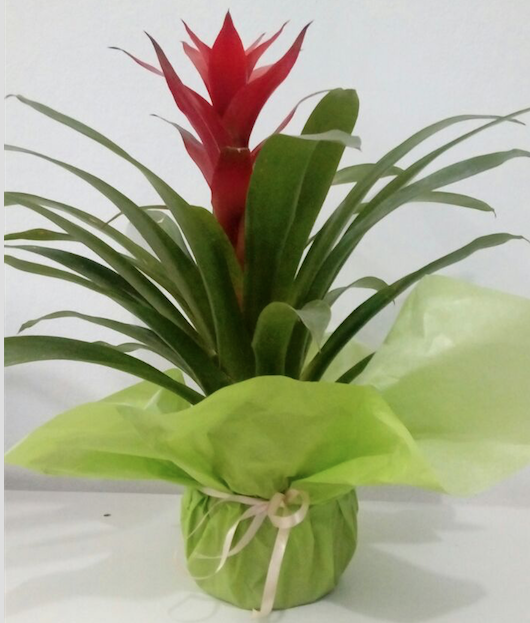 Flores Garanhuns - Floricultura Garanhuns - Produto 1