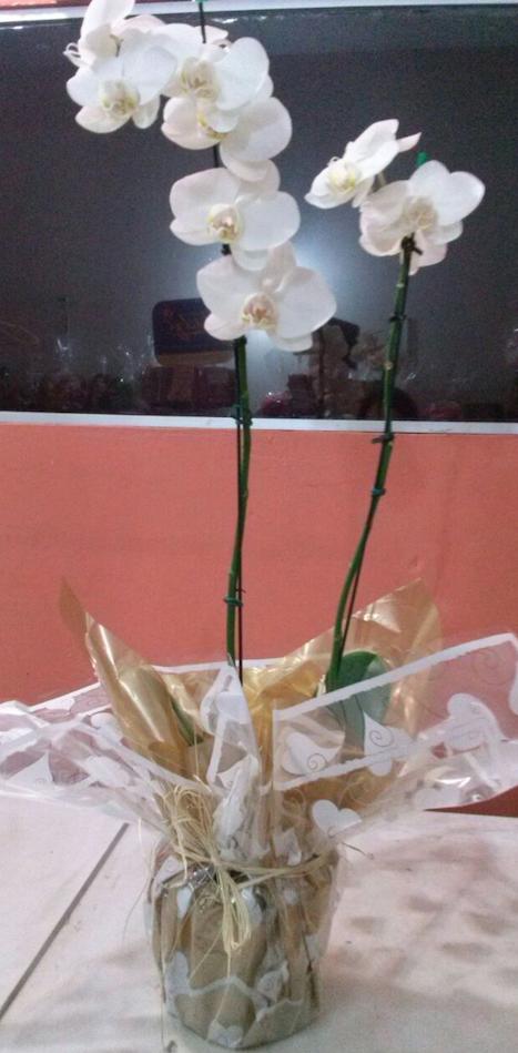 Flores Guapimirim - Floricultura Guapimirim - Produto 1
