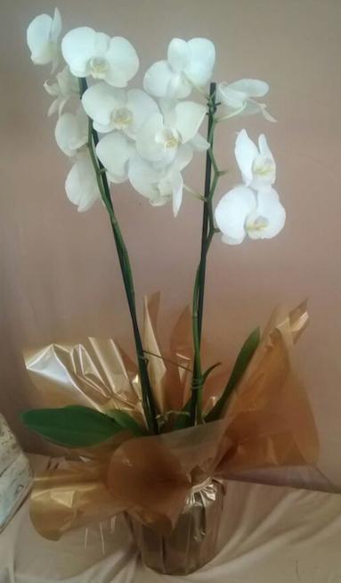 Flores Itupeva - Floricultura Itupeva - Produto 1