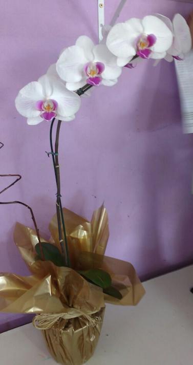 Flores Rio Grande - Floricultura Rio Grande - Produto 1
