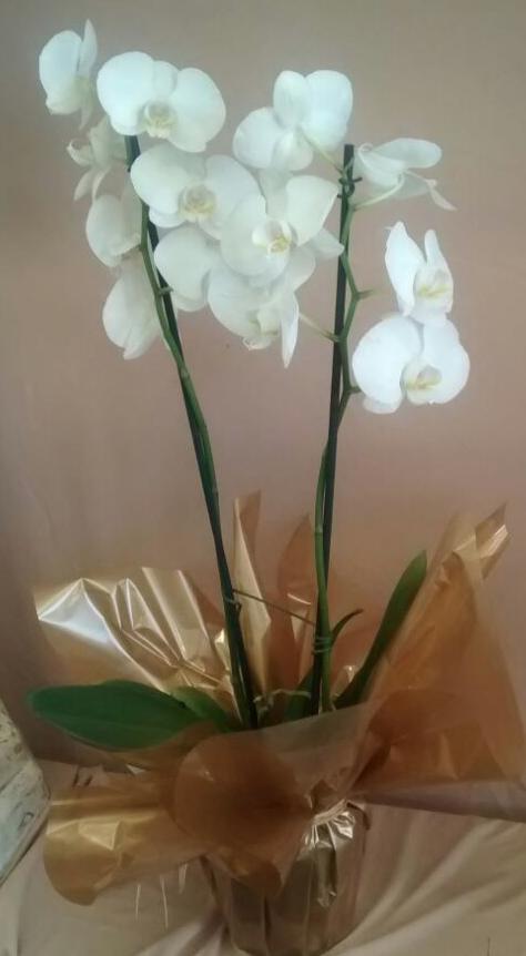 Flores Ipojuca - Floricultura Ipojuca - Produto 2