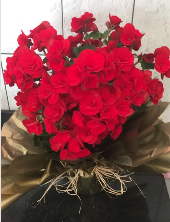 Flores Maringá - Floricultura Maringá - Produto 2