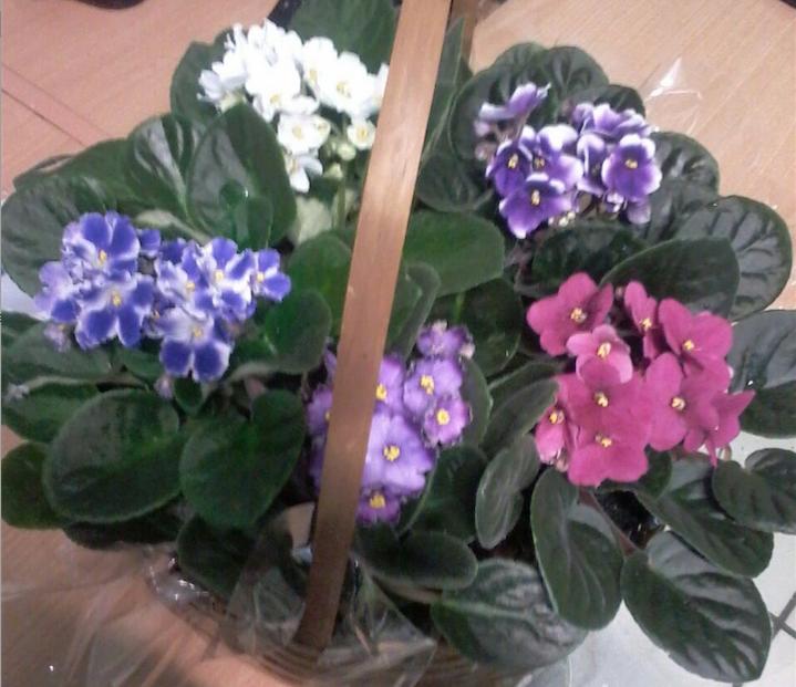 Flores Santo André - Floricultura Santo André - Produto 2