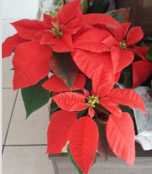 Flores Aparecida de Goiânia - Floricultura Aparecida de Goiânia - Produto 3
