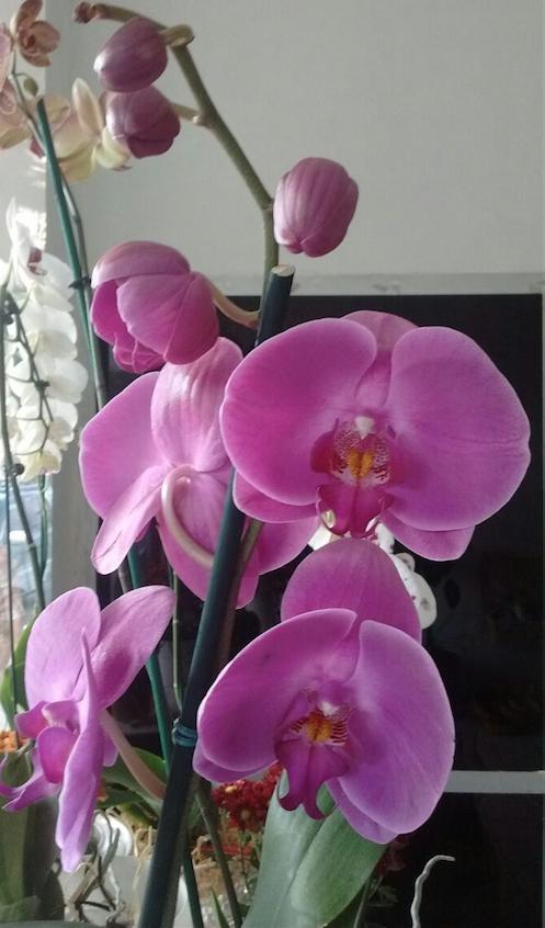 Flores Belo Horizonte - Floricultura Belo Horizonte - Produto 3