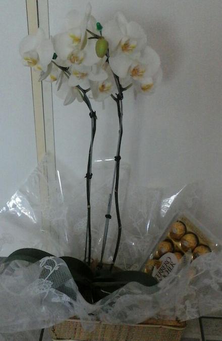 Flores Caldas Novas - Floricultura Caldas Novas - Produto 3