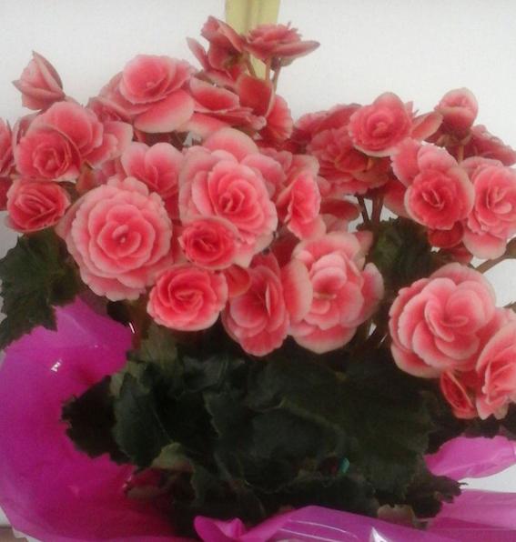 Flores Guarapari - Floricultura Guarapari - Produto 3