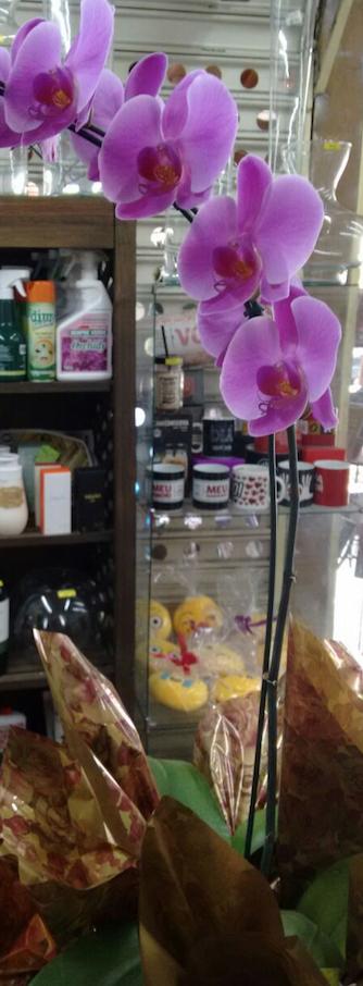 Flores Itaperuna - Floricultura Itaperuna - Produto 3